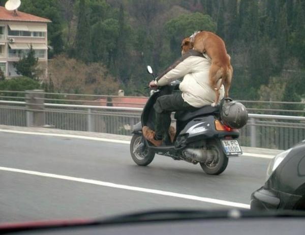 cão-moto